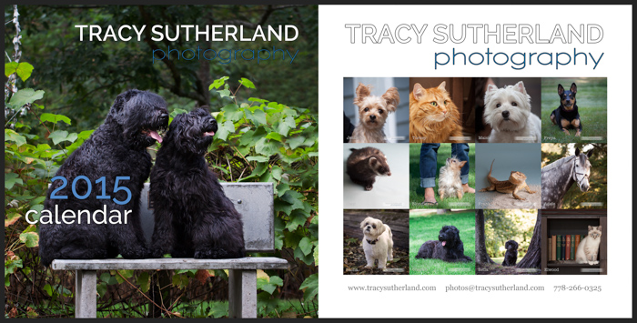 Pet portrait photographer near Vancouver